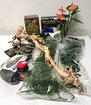 CRESTED GECKO DREAM KIT - for a 12