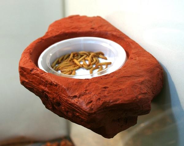Magnatural Worm Dish Large