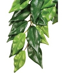 z OUT OF STOCK - EXO TERRA HANGING FICUS - SILK, sm