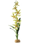 EXO TERRA SPIDER ORCHID