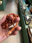 CORN SNAKEs - CB BLOOD RED - 2017 - Elaphe [Pantherophis] guttata