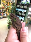 z OUT OF STOCK - WC GREEN EYED GECKO - Gekko smithii