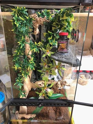 "CRESTED GECKO DREAM KIT - Fully Assembled 12"" X 12"" X 24"""