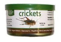 CANNED CRICKETS - EXOTIC NUTRITION  1.2oz