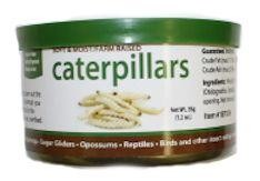 CANNED CATERPILLARS - EXOTIC NUTRITION  1.2oz
