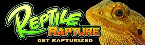 z OUT OF STOCK - Reptile Rapture Bumper Sticker - Bearded Dragon Portrait
