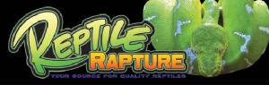 Reptile Rapture Bumper Sticker - Emerald Tree Boa