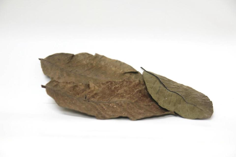 Guava Leaf Litter 10 Pieces Pack