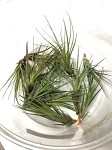OUT OF STOCK - AIRPLANT - Tillandsia melanocrater tricolor