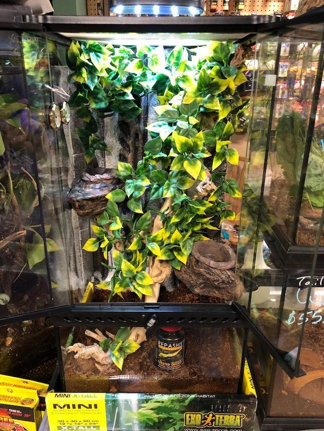 OUT OF STOCK - CRESTED GECKO DREAM KIT - Fully Assembled 12