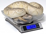 6000 GRAM DIGITAL SCALE