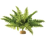 OUT OF STOCK - EXO TERRA BOSTON FERN  - med
