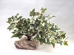 OUT OF STOCK - TROPICAL PLANT - colors vary on leaves and base.