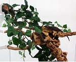 Z OUT OF STOCK - MAGNATURAL VINE CLUSTER