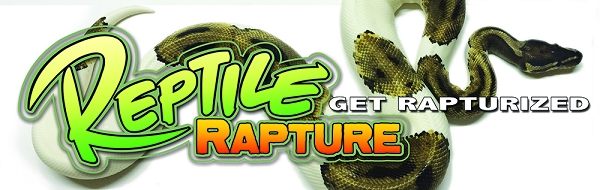 OUT OF STOCK - Reptile Rapture Bumper Sticker - Pied ball python