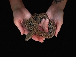 z OUT OF STOCK - DUMERIL's BOA - 2019 Male, acrantophis dumerili (Produced at Reptile Rapture)