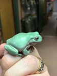 z OUT OF STOCK - WHITE'S TREE FROG (DUMPY) Litoria caerulea - CB big babies