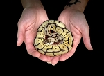 z OUT OF STOCK - PASTEL LEOPARD SPIDER BALL PYTHON - Python regius, 2019 female