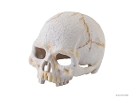 OUT OF STOCK - EXO TERRA mini PRIMATE SKULL