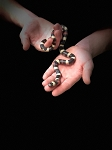 z OUT OF STOCK - PUEBLAN MILKSNAKE - CB 2019 FEMALE, Lampropeltis triangulum campbelli