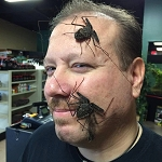 z OUT OF STOCK - Damon variegata, (South American) TAILLESS WHIP SCORPION - juvies