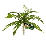ZOO MED - NATURALISTIC FLORA – SWORD FERN