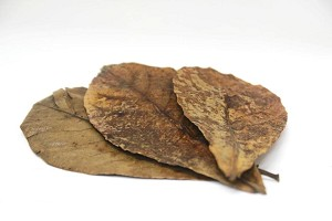 CATAPPA LEAF LITTER - 20 pieces/pack