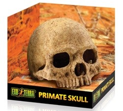 OUT OF STOCK - EXO TERRA PRIMATE SKULL