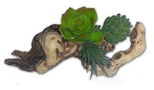3 SUCCULENTS ON DRIFTWOOD