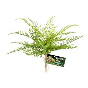 ZOO MED - NATURALISTIC FLORA – LACE FERN
